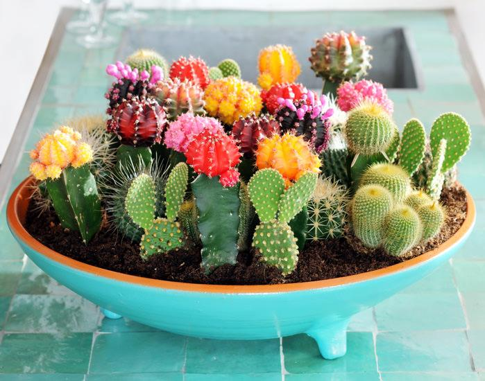 комнатные кактусы польза