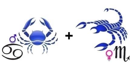 Совместимость знаков Скорпион Рак в любви, сексе и дружбе