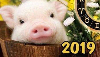 Гороскоп на 2019 год по знакам Зодиака и по году рождения