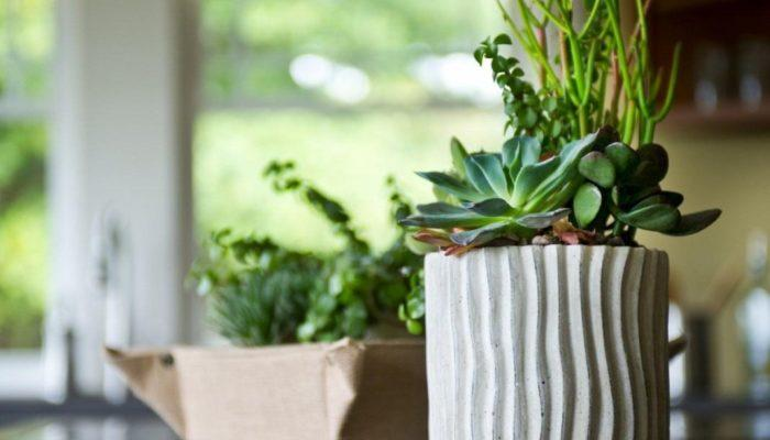 11 комнатных растений за которыми проще всего ухаживать