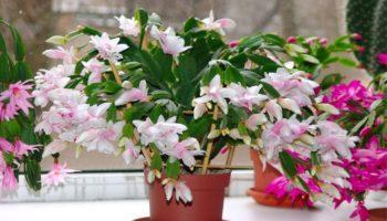 Какие комнатные растения цветут – 8 потрясающих видов
