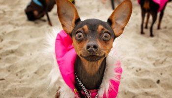 Какие породы собак подходят для квартиры?