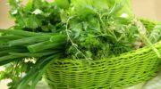 Выращиваем домашнюю зелень